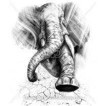 Elephant Trunk Cracked Ground