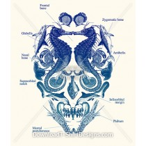 Ocean Creature Anatomy Skull