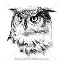 Grey Feather Owl Face