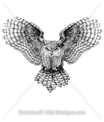 Grey Feather Owl Bird