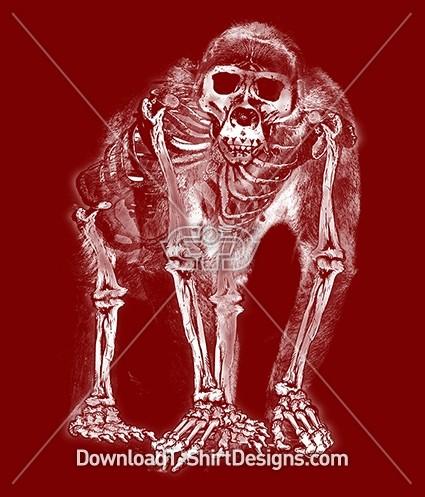Monkey Ape Skeleton X-Ray Silhouette