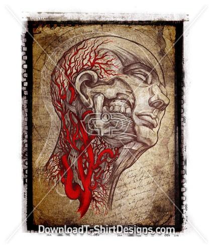 Skull Veins Flesh Man Anatomy Head